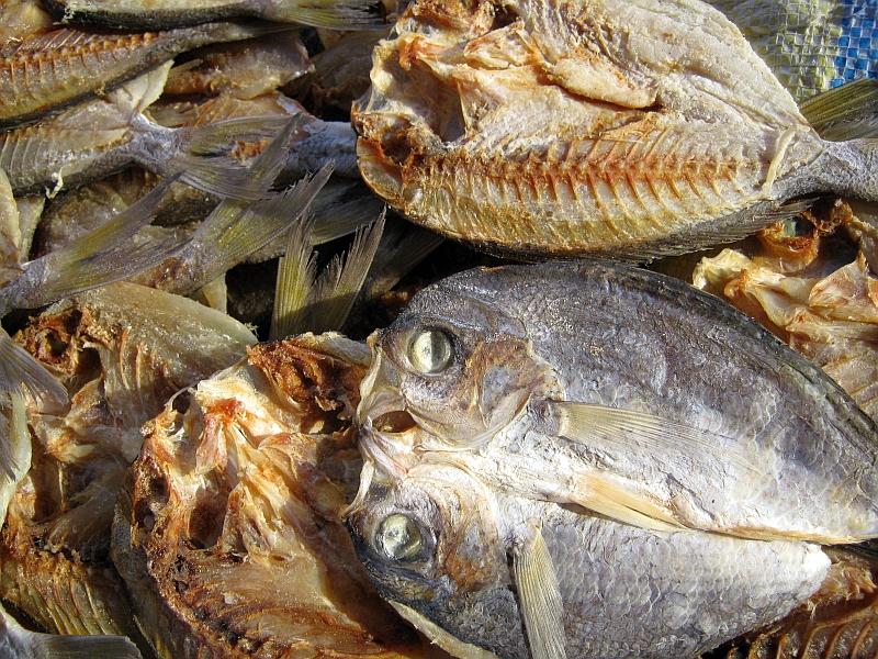 Dried fish bararawan retired no way for Too cool fishing
