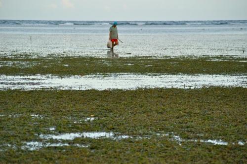 "Beach ""Intertidal Zone"""