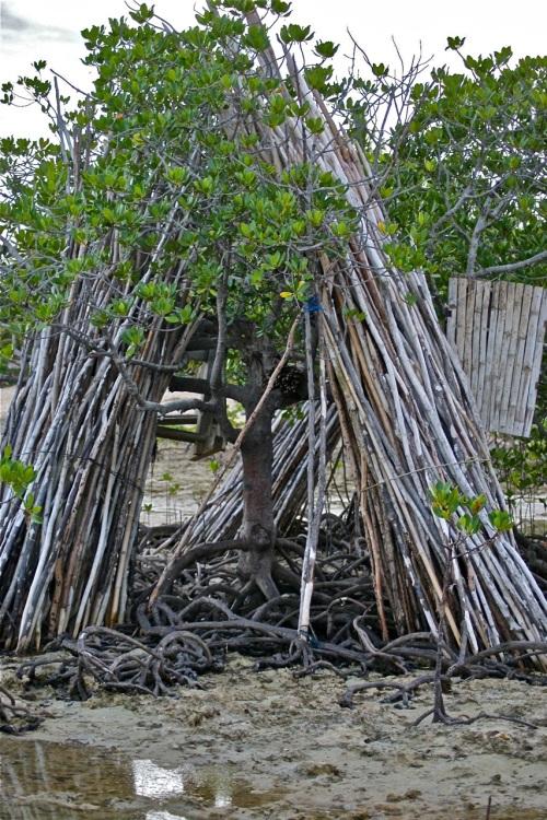 """""""Intertidal Zone"""" Beach Mangrove"""