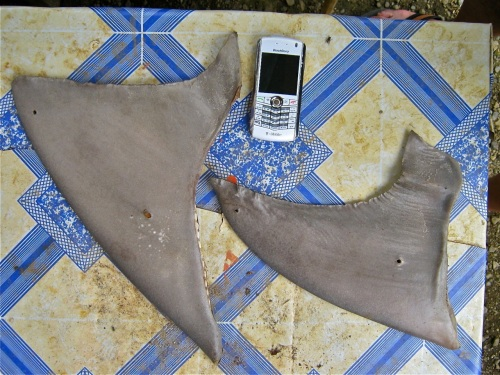 """Shark Fins"" Blackberry ""Marine Products"""