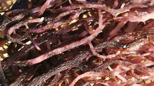 """""""Seaweed Drying"""" Sun Wind"""