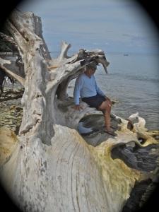 """Retired No Way"" Driftwood Tree"