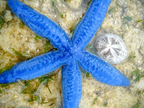 """Retired No Way"" Bisucay Balading Cuyo ""Low Tide"" Starfish ""Sand Dollar"""