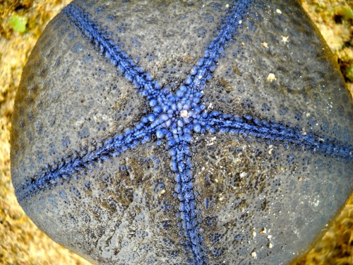 """Bisucay Island"" ""Balading"" ""Low Tide"" ""Retired No Way"" ""Basket Star"" Echinoderm"