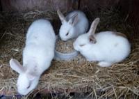 """""""Breeding (image: revdwesleyfairhurst.blogspot.com)"""" joke retirednoway"""