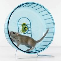 """Hamster Wheel (image: unusual pets.org)"" retirednoway"