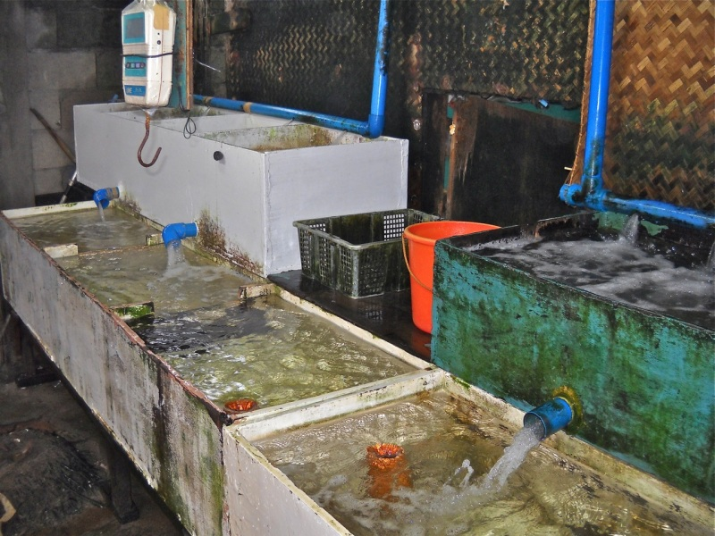 These were the holding tanks for fish that were newly for Fish holding tanks