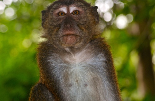 """""""Curious monkey at the mouth of the cave of the Underground River"""" retirednoway"""
