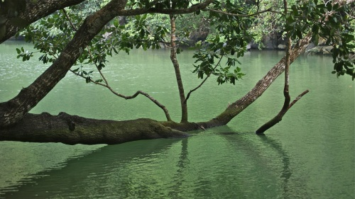 """""""To the right of this submerged branch lies the mouth of the cave."""" retirednoway"""