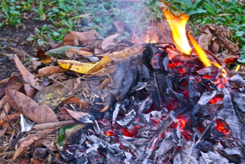 """""""A small brush fire of leaves"""" retirednoway"""