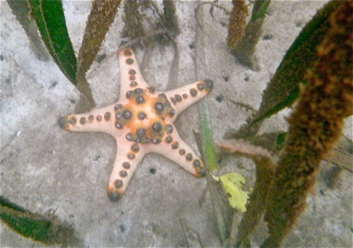 """Starfish were abundant enough, there was one for every several square meters."" retirednoway"