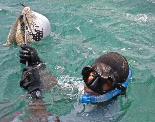 """retirednoway, """"Adrian with his surprise catch -- a puffer fish! When threatened, or in this case, speared, it ingests water so it swells to a ridiculous size. Compare its size in this photo to the ones below."""""""