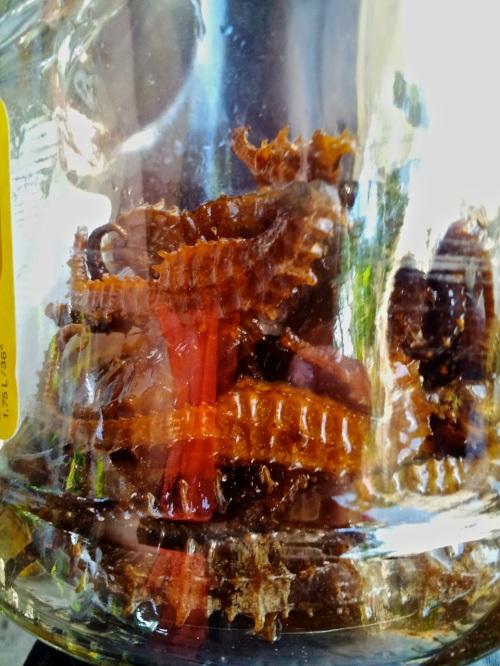 Sea Cucumber, retirednoway, seahorse, brandy