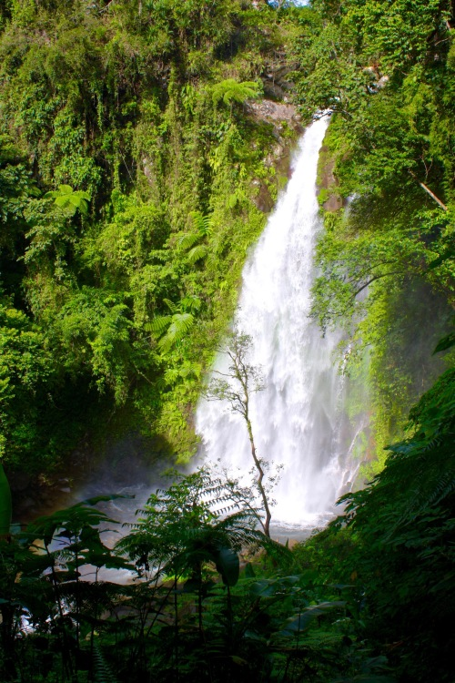 Eight meters high and gorgeous foliage at Ulan-Ulan Falls, Almeria, Biliran Island.jpg